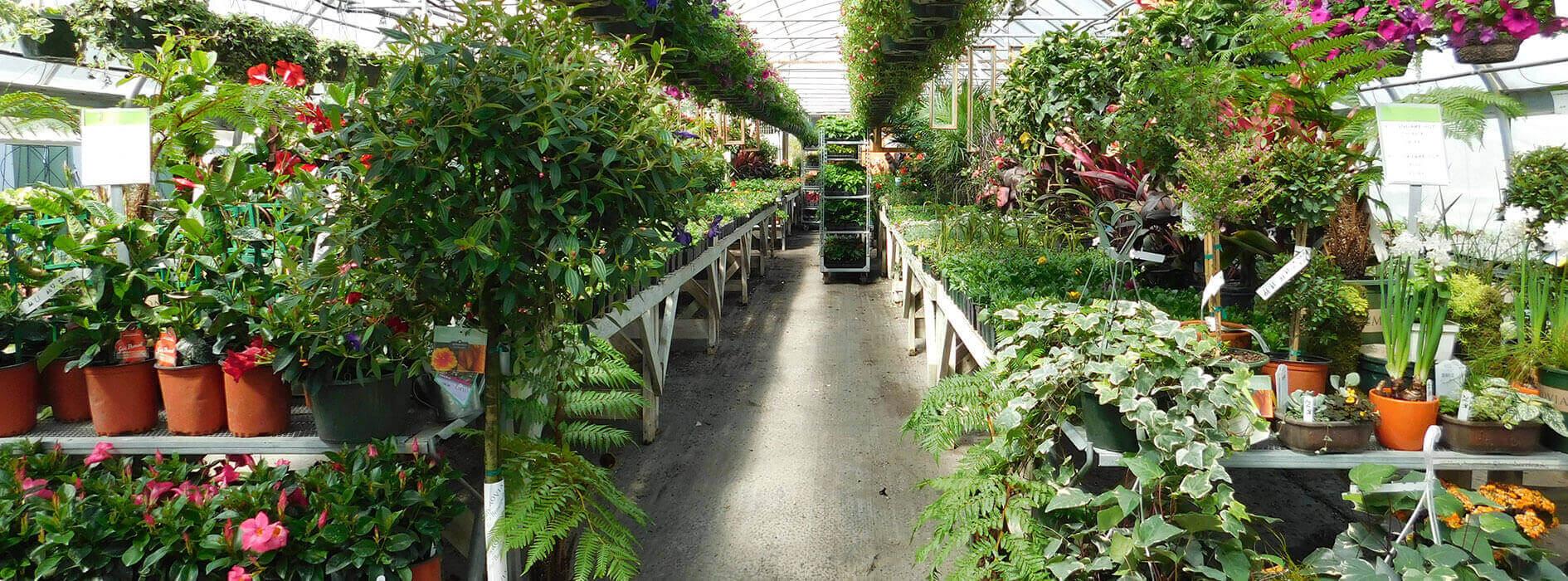 Garden-Centre_Heidis-GrowHaus-Lifestyle-Gardens
