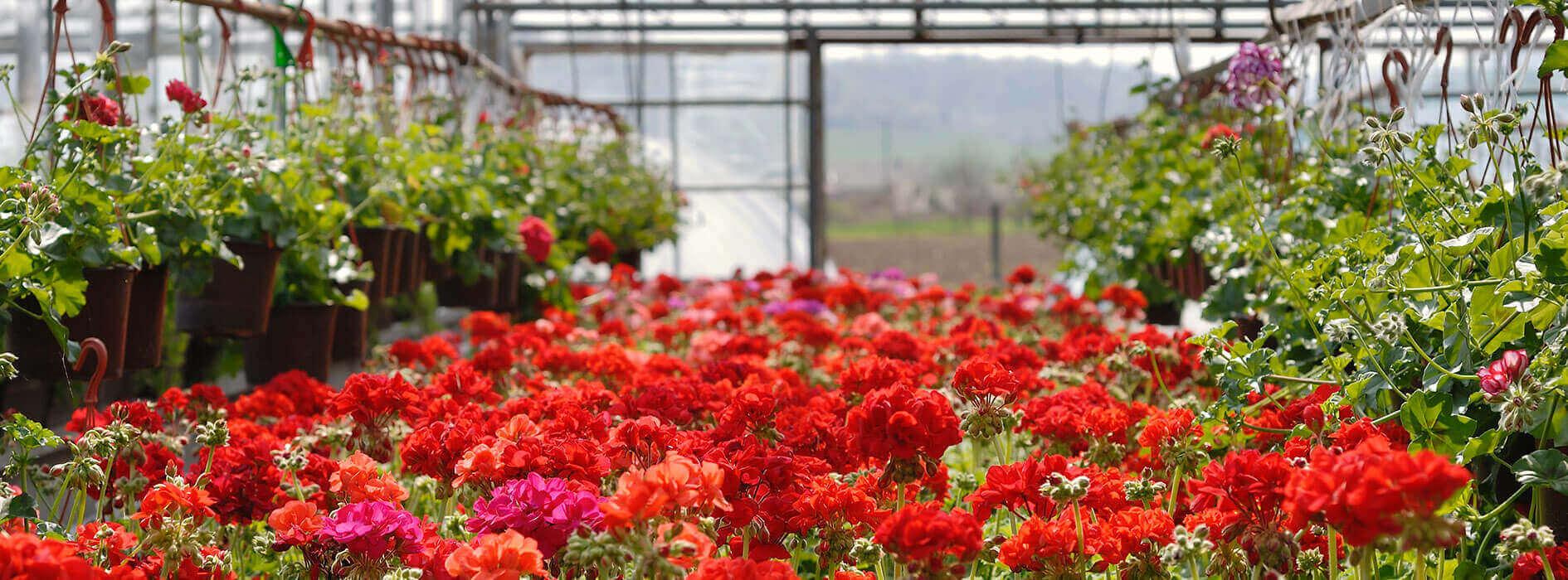 Garden-Centre_Heidis-GrowHaus-Lifestyle-Gardens3