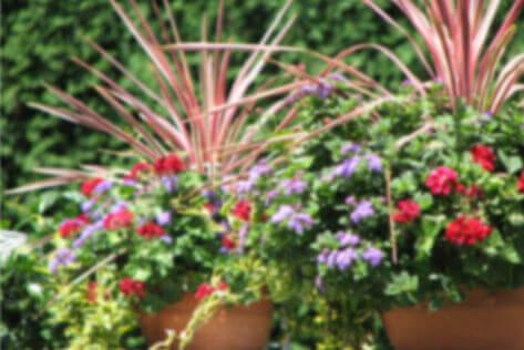 Summer-Seasonal-Containers-Heidi's-GrowHaus-&-Lifestyle-Gardens-Homepage-Highlight