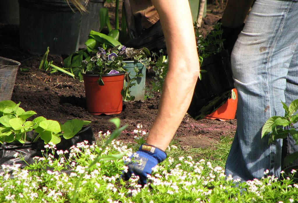 Garden-Maintenance-Services-Lifestyle-Gardens-Tunnel-Image.jpg