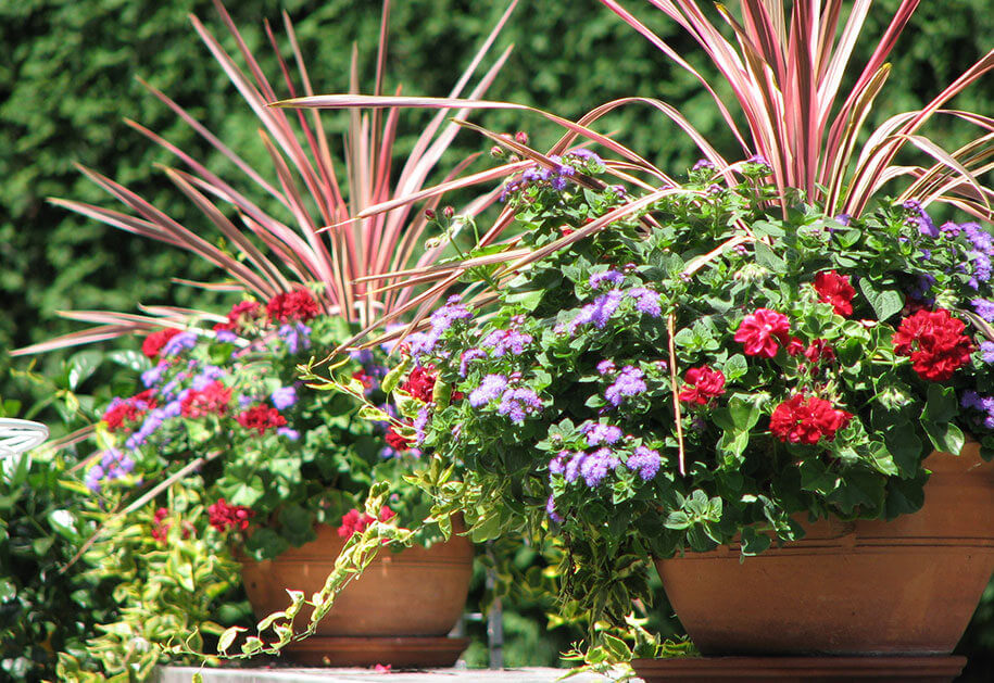 Summer-Seasonal-Containers-Heidi's-GrowHaus-&-Lifestyle-Gardens-Mobile-Highlight