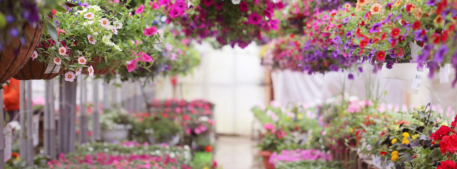 Garden-Centre_Heidis-GrowHaus-Lifestyle-Gardens4