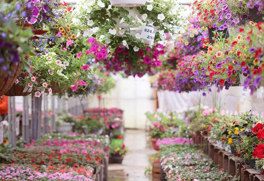 Hanging-Baskets-Heidi's-Garden-Nursery-Mobile-Image