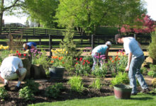 The Do's and Don'ts for Spring Yard Clean Up