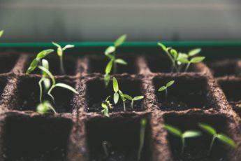 new seedlings, plants, hardening off plants